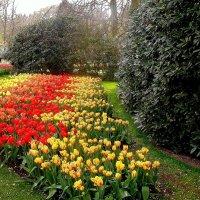 Голландская весна :: svetlana.voskresenskaia