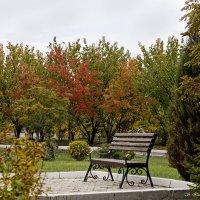 Осень скверы украшает Разноцветною листвой. :: Светлана