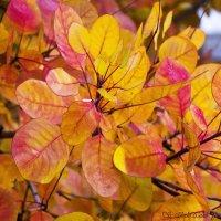 Золотые листья :: Светлана