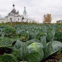 Зреет, зреет урожай. :: Михаил Попов