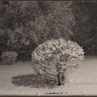 Куст накрытый снегом :: Алексей Хвастунов