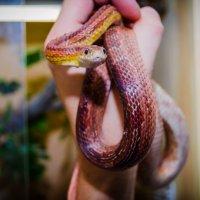 Змея :: Виталий Бжицких