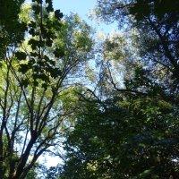 Начало октября, все еще зеленое :: татьяна