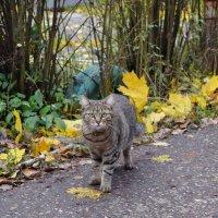 Остановилась на фоне жёлтых листьев и я поняла, что она позирует. :: Татьяна Помогалова