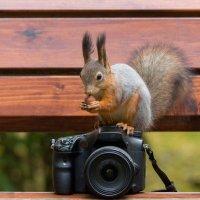 Обучение фотоисскуству :: Alex Bush