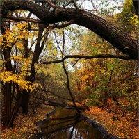 Река Серебрянка. Москва, Измайловский парк. :: Mi Fo