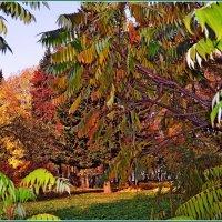 Такая пестрая осень... :: Vladimir Semenchukov