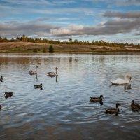 Городищенское озеро и его обитатели :: Ирина Никифорова