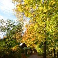 Осень золотая :: Ирина Никифорова