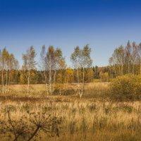 Золотая осень. :: Владимир Буравкин