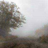 туман :: Viktoria Anufrieva