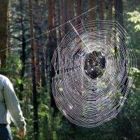 Лес радует! :: Владимир Шошин