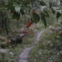 Дождик :: Алексей Хвастунов