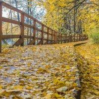 Осень :: Борис Устюжанин