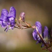 Лютики-цветочки :: Ирина Токарева