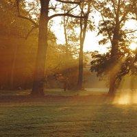 туманное утро :: Alexander Andronik