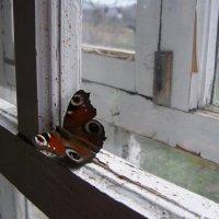 первая бабочка :: Анна Воробьева