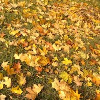 На ковре из желтых листьев... :: Аlexandr Guru-Zhurzh