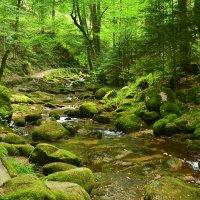Зеленый ручей :: Николай Танаев