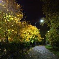 Осенние мотивы. Вечер. :: Larisa