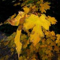 Осенняя листва :: Асылбек Айманов