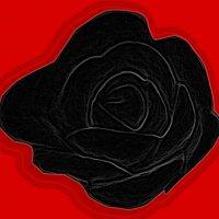 черная роза :: Юлия Денискина