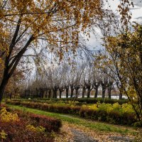 palette of autumn :: Dmitry Ozersky