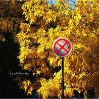 Осень уже не остановить... :: Сергей Порфирьев