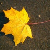 Осенний мотив :: Оксана Шалаева