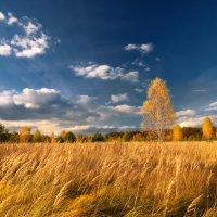 Под небом осени... :: Roman Lunin