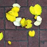 Листья желтые ... :: Сергей Рубан