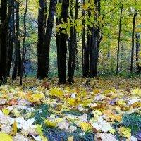"""Осенний ковёр"" :: Милешкин Владимир Алексеевич"
