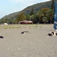 Отдыхающие на пляже ....Абхазия :: Сергей К.