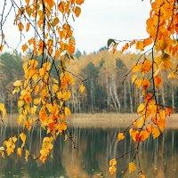 Настроение Осень :: Татьяна Баценкова