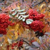 Осень разноцветная :: игорь