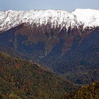 В горах :: Виолетта