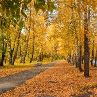 Осень в разгаре. :: юрий Амосов