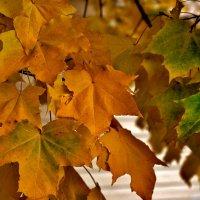Колорит Осени... :: VADIM *****