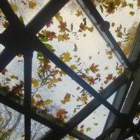 рисунки осени (на крыше оранжереи в Летнем саду) :: Елена