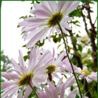 Замёрзла однако, не лето поди....Погреюсь под цветком... :: Любовь К.