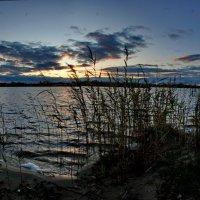 Городское озеро :: Валерий Толмачев