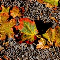 Разноцветье осени :: Нина Бутко