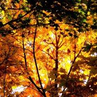 Осень выкрасила город колдовским каким-то цветом... :: Нина Бутко