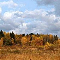 Осенний лес :: Татьяна