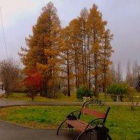 Осенний пейзаж в парке . :: Мила Бовкун
