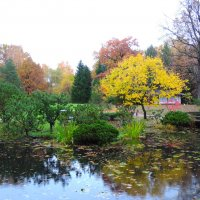 Японский сад :: Елена Якушина