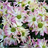 Цветы осенние... :: Валерия Комова