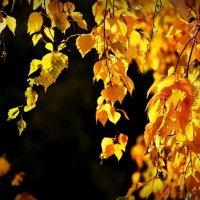 Тихая  осень. :: Валерия  Полещикова