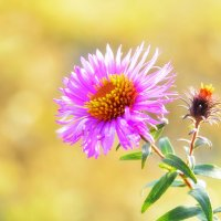 Осенний цветок... :: Юрий Гординский