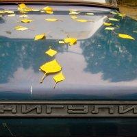 Листья осени :: OLLES